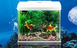 """家裡放個魚缸財運""""錦上添花"""",從此家運順風順水!解密魚缸的擺放位置和原理!"""