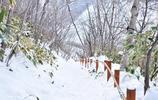 愛旅行:日本北海道之旅,一場與冬雪浪漫的邂逅