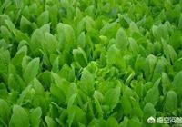 菜農給青菜打農藥一般都是用哪幾種農藥,這些打了農藥的青菜用自來水能沖洗乾淨嗎?