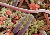 為什麼慢性胃炎會變成變萎縮性胃炎?