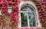 最美的幾種爬藤植物,開花美美的,讓你的陽臺秒變小花園