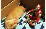 奧特曼陪伴小橘貓成長,這個速度嚇壞了鹹蛋超人……