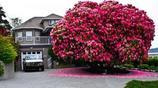 盤點世界最美的10棵樹,中國一棵有著上千年曆史,美國有5棵