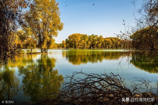 非常想去的塔里木胡楊林森林公園