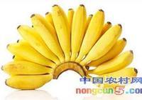 芭蕉很小營養卻高