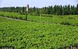 新疆吐魯番葡萄溝景色迷人
