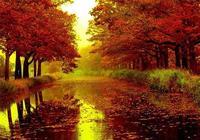 深秋落葉,斑駁了一地的惆悵
