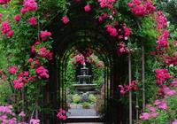 別墅庭院,一方天地,花開正好