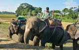 旅行遊記 在尼泊爾一群大象在圍堵小犀牛 只為了那一眼 好好玩