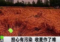 70畝小麥必須手割,別為空氣數據好看而故意刁難