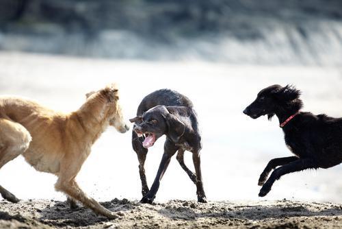 狗為了保命,會用自己的語言系統,儘量避免衝突弄傷自己