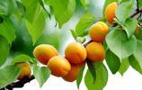 """農村裡的6大野果子,你要是全吃過,請允許我叫你一聲""""山裡娃"""""""