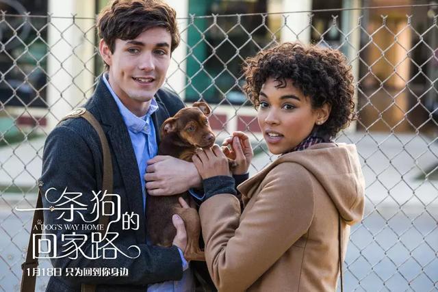 """狗狗電影的母題:""""靈犬萊西""""的童話與""""忠犬八公""""的故事"""