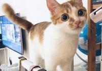 在家就能給貓咪做體檢?!注意這四點就夠了!!!