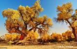 不一樣的千年胡楊林!敦煌的秋天,這是你絕對沒有見過的美景