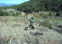納西族鷹獵習俗