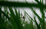 北京野鴨湖溼地自然保護區,鴨子真多