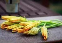 南瓜全身都是寶,葉子跟花最美味,大多人不知道怎麼吃