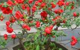 家裡這3種盆栽一定要養!不僅可以淨化空氣,還有觀賞性
