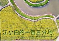 做全產業鏈之前,江小白考慮過這三個問題嗎?