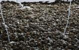探訪陽澄湖大閘蟹村,工人連續工作13小時撈2萬斤,月入過萬