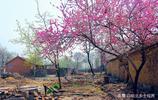 8張皖北農村面貌新舊對比圖,4圖民房最漂亮,現在農民樂了
