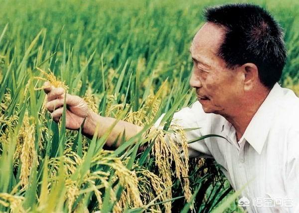 你認為袁隆平與楊振寧誰的貢獻更大?