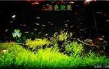 魚缸水族草缸最好最專業的賽級燈都齊了,最常用的紅魚不紅水的燈