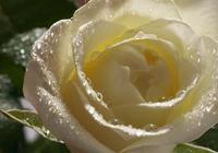 施愛與花兒
