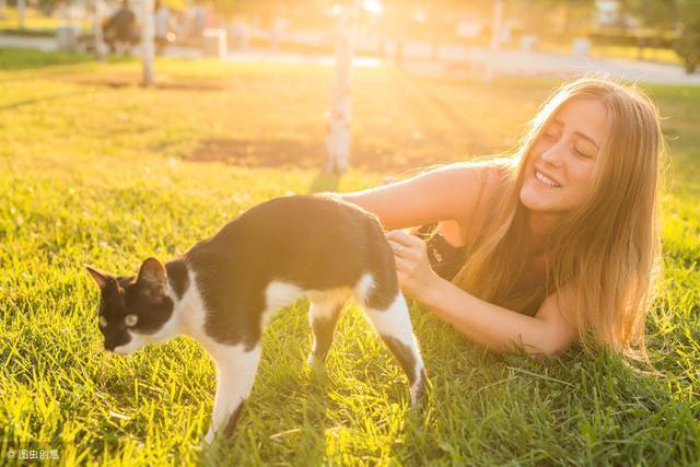 """一隻貓  帶給主人的一份""""遺囑"""""""