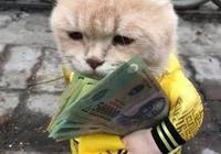 橘貓幫主人賣河豚,頭頂河豚,表情卻與河豚一模一樣