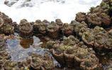 活著的岩石:就差變成真石頭了,這樣都被吃成了瀕危物種
