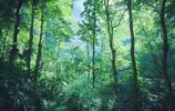 國有處天坑祕境:藏全球最大地下原始森林,面積達9.6萬平方米