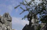 石林風景區遊記,栩栩如生的石林