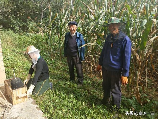 收穫的季節到了!看看秦嶺深山裡的農民,他們都會幹些什麼?