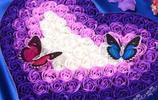 情人節裡,你心愛的她,手中怎能少的了美麗的花束