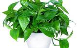 家裡養有這四種植物的趕緊扔了吧,第四種估計現在每家都有養!