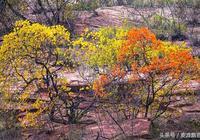 王振民視覺 美麗秋天多彩季節