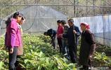 江西農民成造林致富明星!七葉一枝花賣2000元一斤,把荒地變寶地