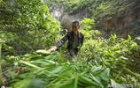 又到包粽子的時候,這裡的村民走出家門到崇山峻嶺中採摘野生粽葉