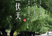 """""""三伏天""""最適合喝花雕酒?"""