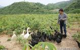 陝西40歲小夥北京打拼20年,年薪達50萬,為何卻放棄高薪回農村?