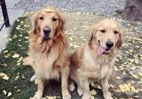 養狗是養公狗好還是養母狗好?