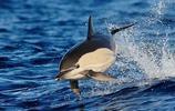 海豚 海洋裡各種各樣的海豚 有沒有想去撫摸一下?