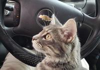 小貓險被當鬥狗誘餌,被收養後竟成了超治癒警貓……全警局淪陷