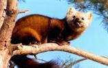 恭疏乾貨:12種國家一級保護動物盤點,必須收藏!