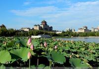北京蓮花池公園荷花