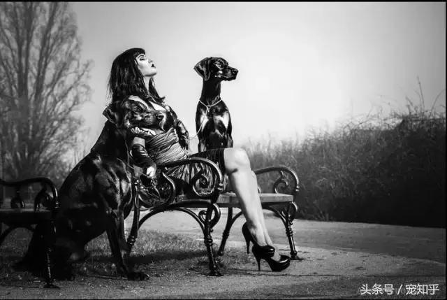「高貴與俊朗」百年貴族杜賓犬