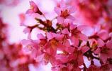 5月有粉晶加持桃花運旺盛,有望脫單的4個生肖,你在其中嗎