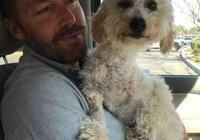遭遇車禍被截肢的泰迪犬,在主人的照顧下活潑得根本不像只殘疾狗